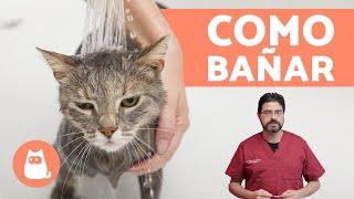 ¿Cómo bañar a un gato cachorro?  ¡CONSEJOS VETERINARIOS!
