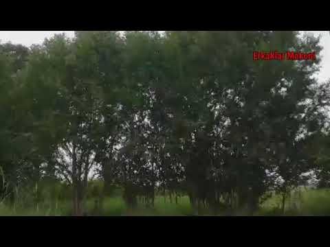 ЭРТАЛАБГАЧА ФУТБОЛ КУРАМИЗ ДЕБ БОБОЙ КЕЛИН БИЛАН