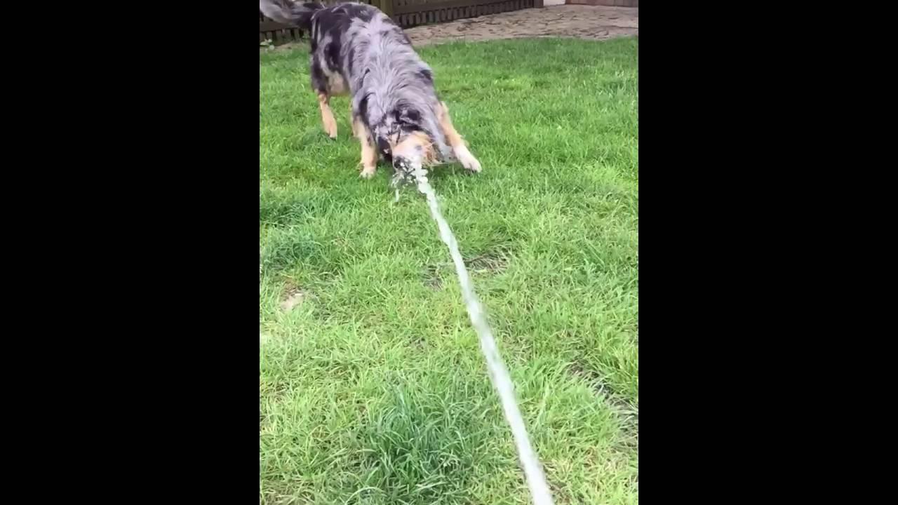 Hund Schnappt Nach Baby