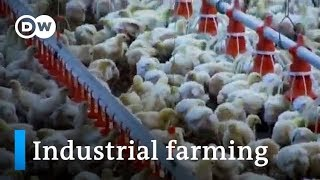 Industrial Livestock Farming | Made in Germany