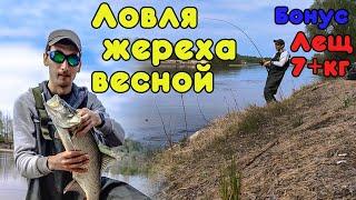 Ловля жереха Лещ весом 7кг Шикарная весенняя рыбалка на реке