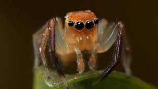 Alien Nature 2. Amazing Arachnoids Out This World Spiders Producing Strongest Ever Material