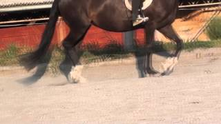 Farting animals compilation   funny cats dogs horses passing gas