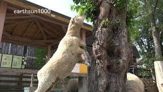 円山動物園 2019年.