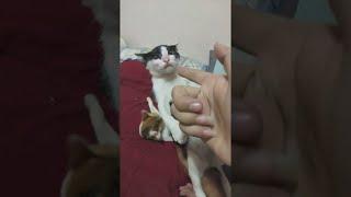 Cute Kitten Plays a Great Game || ViralHog