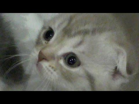 Вопрос: Помогите определить пол котенка?