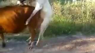 funny animal video for whatsapp