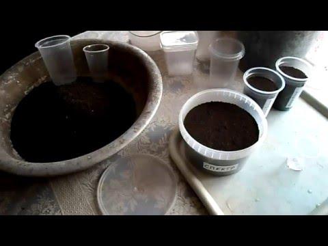 №79 Табак  Подготовка к посеву  Готовим грунт