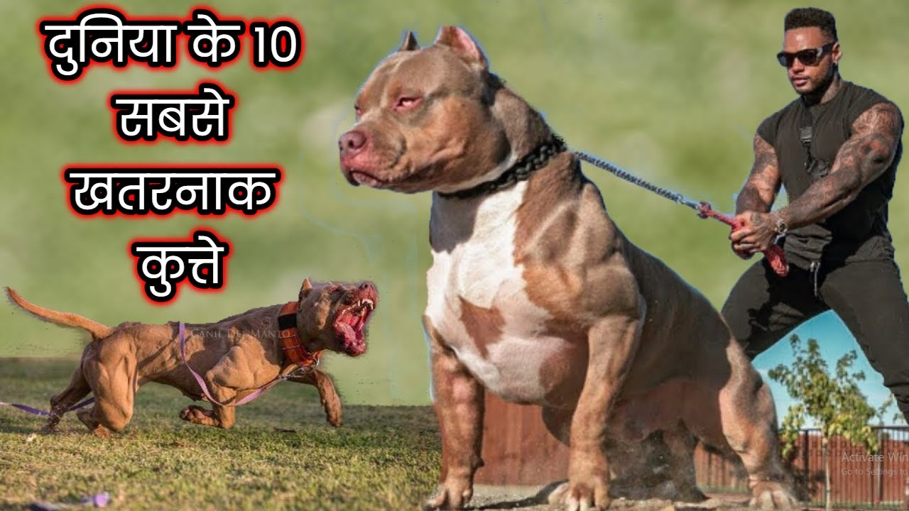 दुनिया के 10 सबसे खतरनाक कुत्ते | 10 Most Dangerous Dog Breeds in the World | Dogs Facts in Hindi