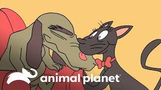 ¡Gatito es criado por perro malhumorado! | Animales y famosos | Animal Planet