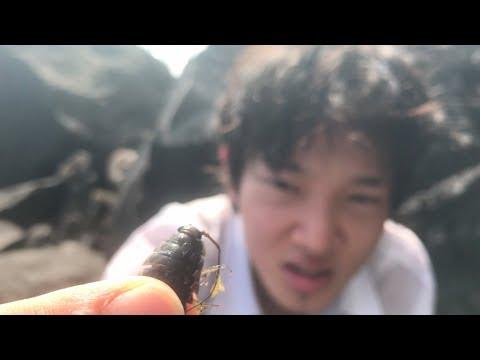 【閲覧注意】フナムシを生きたまま食べたら・・・  島で遭難#4