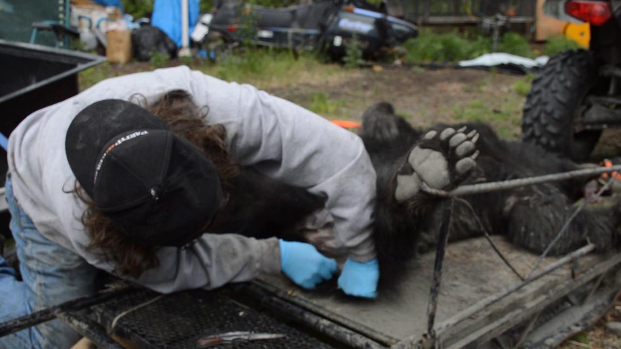 rug mount Part 2 Alaskan Black Bear