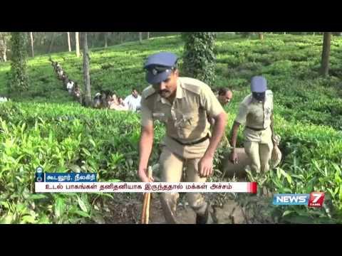 Tiger kills tea estate worker at Gudalur, Nilgiris | News7 Tamil