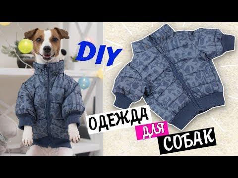 мастер класс одежда для собак