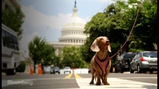Top Dogs: Meet the Canine Caucus of Capitol Hill