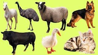 Домашние Животные | Учим домашних животных |Учим голоса и звуки домашних животных|Животные для детей