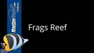 American Marine Pinpoint pH Monitor Review by Frags Reef - Marine Depot Product Test Team