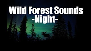 Forest Sounds at Night