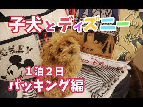 【子犬とディズニー】トイプードル初めてのお泊まり旅行!1泊2日パッキング編