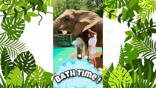 Bath Time for Bubbles the Elephant!