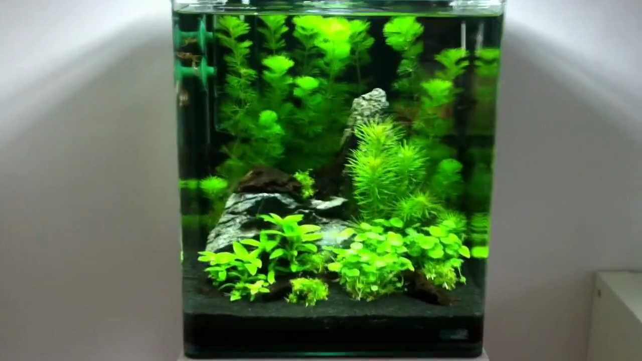 Nano cube 30l youtube for Aquarium nano cube