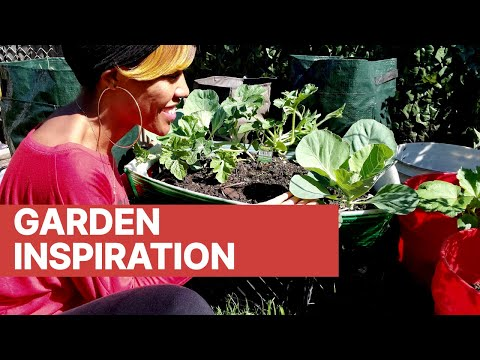 How to grow butternut squash - Episode 05 from YouTube · Duration:  14 minutes 6 seconds