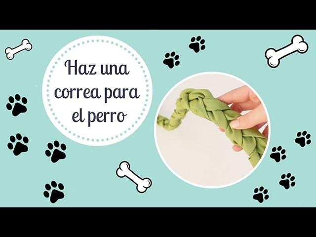 ¿Cómo hacer una correa para perro casera? ¡Bien fácil!