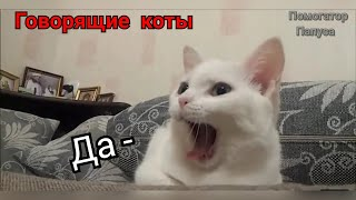 Download Говорящие коты! Лучшая подборка №4  (внимание! 18+) Mp3 and Videos