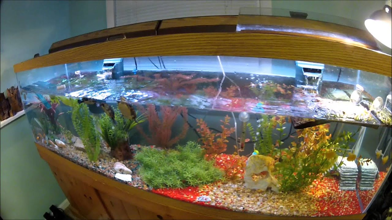 Fish tank painting - 125 Gallon Painted Turtle Tank Set Up