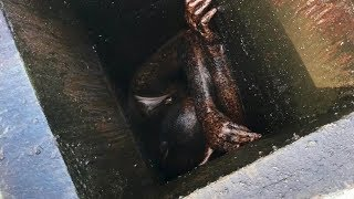 Would-be-burglar trapped in grease vent is lucky to be alive