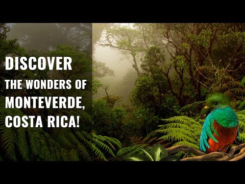 Discover Monteverde, Costa Rica!