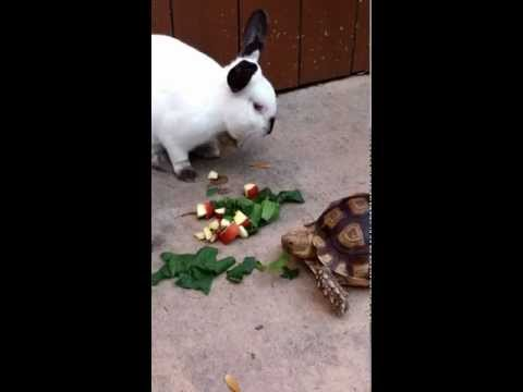 Tortoise and the Hare Do Lunch thumbnail