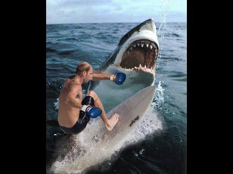 Une grand-mre tue par un requin blanc de la taille de Jaws