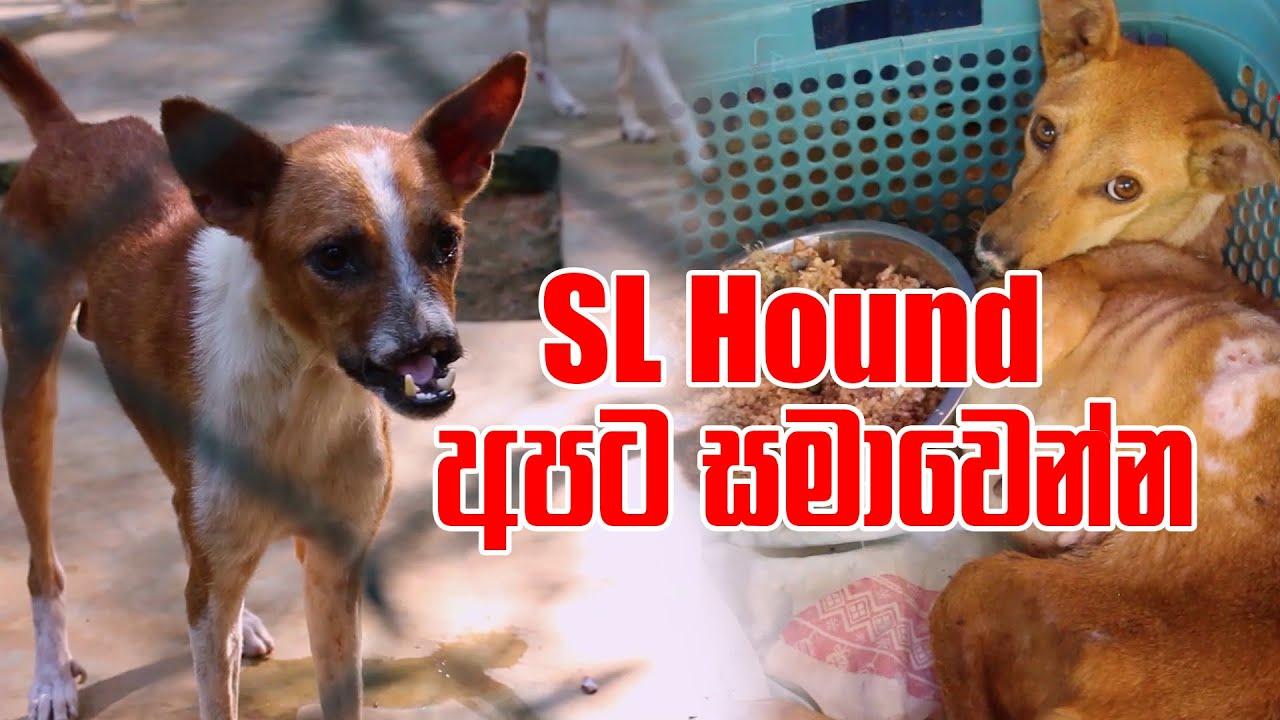 SL Hound අපට සමාවෙන්න | Pet Talk