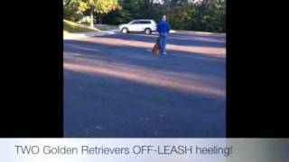 Two Dogs Off-leash Heeling Together! Obedience Training, Virginia