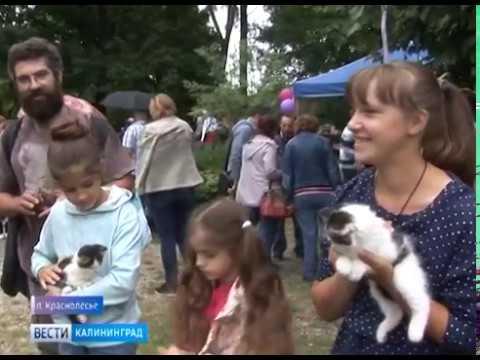 В Калининградской области прошёл культурно фольклорный фестиваль «Соседи»