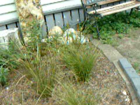 NZ native plants at home part 1
