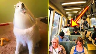 If These 50+ Samoyed Photos Don't Make You Smile, Nothing Will
