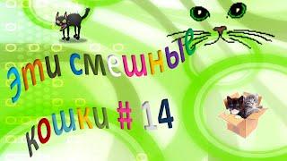Эти смешные кошки # 14 Коты и кошки  Радость для детей и взрослых!
