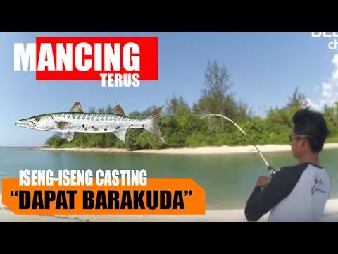 ISENG CASTING DAPAT BARAKUDA DI PINGGIR PANTAI || MANCING TERUS