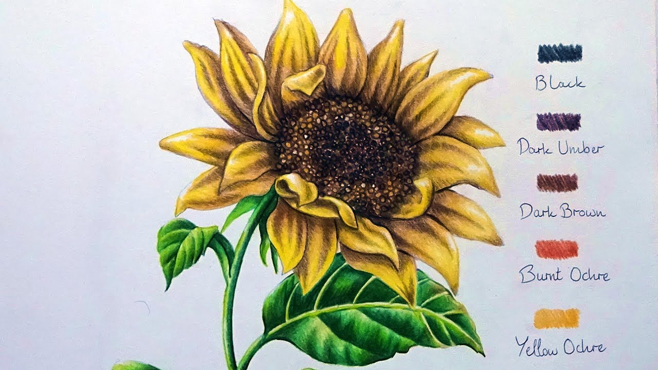 Speed Drawing: Sunflower - YouTube