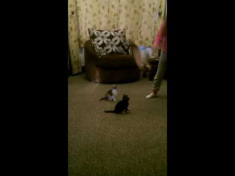 Dancing with kittens Bobby and Bella