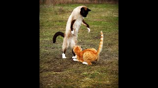 Cats Fighting Video Compilation 2020 #2