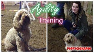 Dog Agility Fun 21 - Cockapoo Training