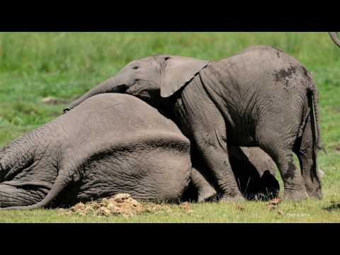 Carl Safina: What Animals Think and Feel