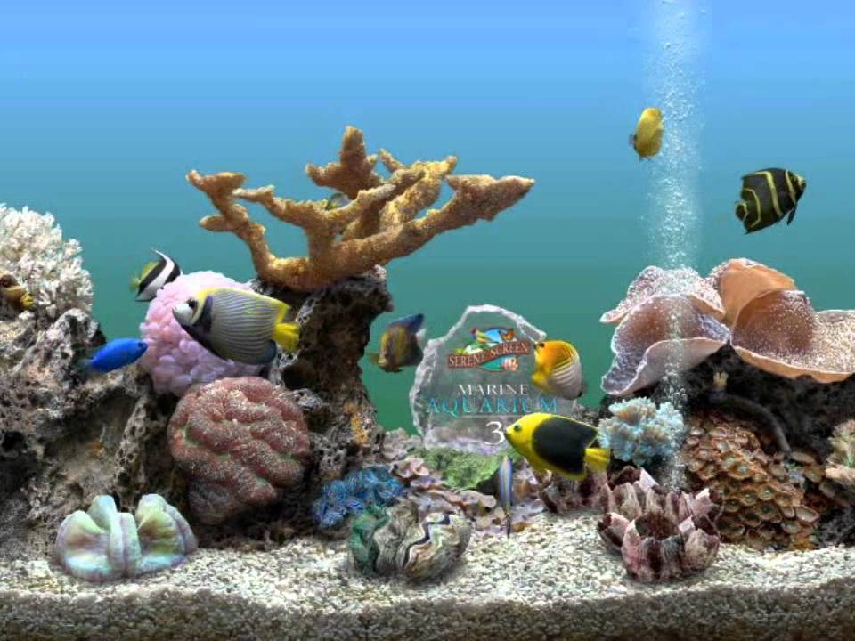 3d aquarium screensaver crack working 100