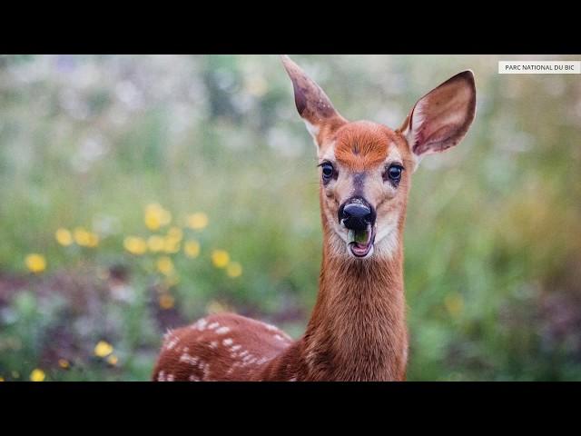 Sépaq - Nature, Québec Canada. Photographies de paysages et animaux sur les territoires de la Sépaq.