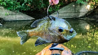 Fishing For POND MONSTERS with GIANT LIVE BAIT!!! (Big Fish)
