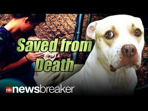 Video: Tennessee Woman Takes in Severely Abused Pit Bull