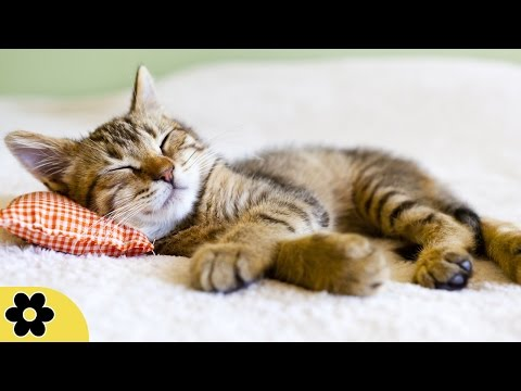 8 Hour Relaxing Sleep Music, Calm Music, Soft Music,  Instrumental Music, Sleep Meditation, ✿2479C